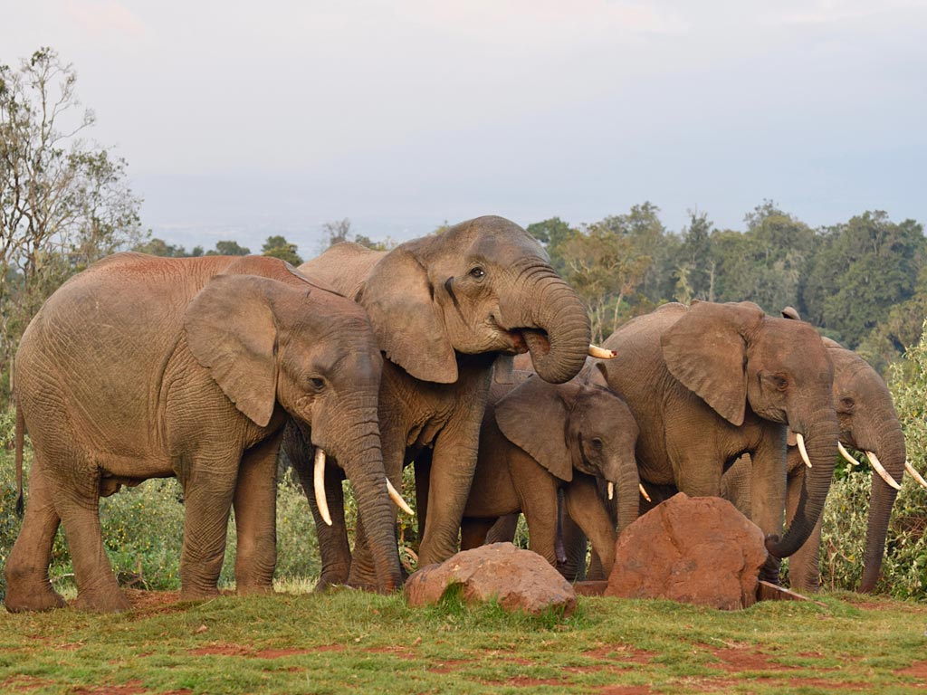 Image result for aberdare national park