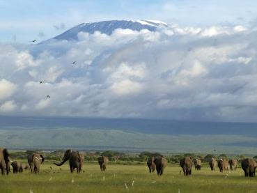 featured-Amboseli-NP_Ute-Stierle_1