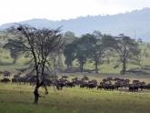 Amboseli-NP_Maciej-Sudra_1