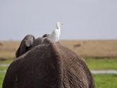 Amboseli-NP_Maciej-Sudra_23