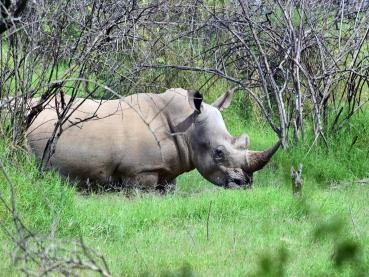 featured-Lake-Nakuru-National-Park_Maciej-Sudra_26