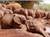 David-Sheldrick-Wildlife-Trust_2