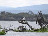Lake-Naivasha-NP_Maciej-Sudra_29