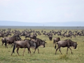 Masai-Mara-GR_Maciej-Sudra_29