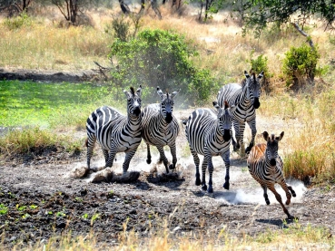 featured-Kenya-Classic_lodge-safari_1
