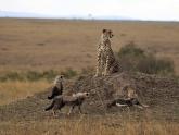 Kenya-Classic_lodge-safari_3