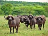 Kenya-Classic_lodge-safari_4