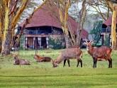 Kenya-Classic_lodge-safari_5