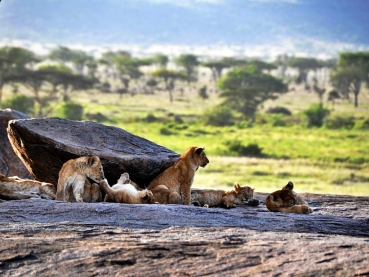 featured-Kenya-and-Tanzania_lodge-safari_1