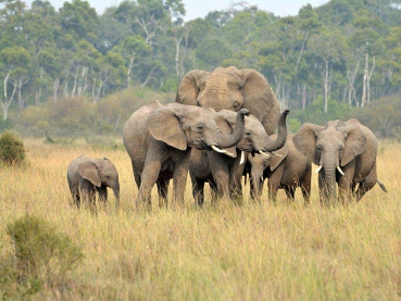 featured-_Elephant-herd_Maciej-Sudra_179