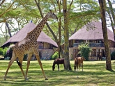 Wildlife_Sopa-Lodge