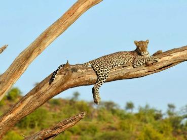 featured-Leopard_Maciej-Sudra_13