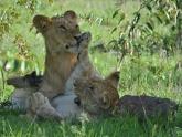 Magical-Masai-Mara_lodge-safari_3