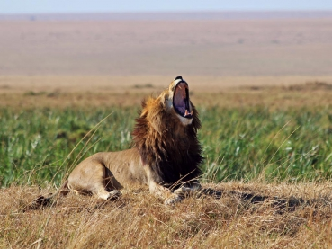 featured-Masai-Mara-GR_Maciej-Sudra_168