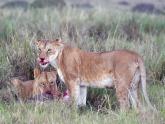 Masai-Mara-GR_Maciej-Sudra_138