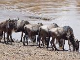 Masai-Mara-GR_Maciej-Sudra_55