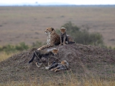 Masai-Mara-GR_Maciej-Sudra_66