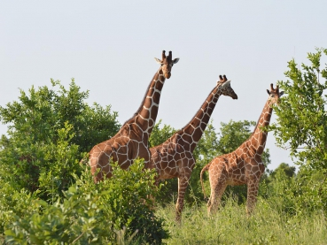 featured-Meru-National-Park_Maciej-Sudra_3