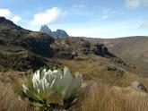 Mount-Kenya-NP_Maciej-Sudra_27