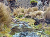 Mount-Kenya-NP_Maciej-Sudra_31