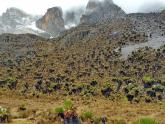 Mount-Kenya_Maciej-Sudra_30