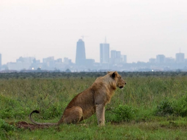 featured-Nairobi-National-Park-Maciej-Sudra_12