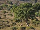 Nairobi-National-Park_Devina-Meinzingen_3
