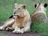 Nairobi-National-Park_Maciej-Sudra_10