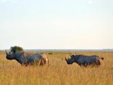 Nairobi-National-Park_Maciej-Sudra_21