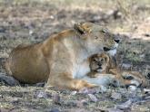 NGO_Serengeti_Maciej-Sudra_36