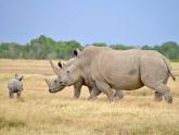 Rhino_Maciej-Sudra_8_