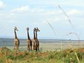 Some-giraffes_Maciej-Sudra_152