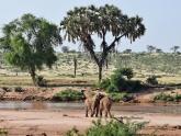 Samburu-GR_Maciej-Sudra_27