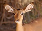 Samburu-GR_Maciej-Sudra_38