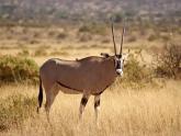 Samburu-GR_Maciej-Sudra_71