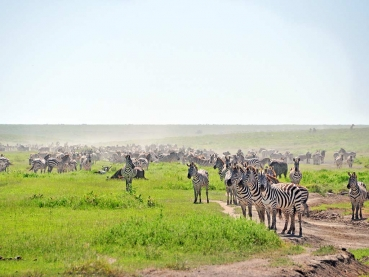 featured-Kenya-Savannah-and-Sea_lodge-safari_1