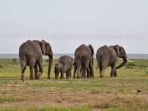 Kenya-Savannah-and-Sea_lodge-safari_2