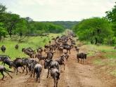 Kenya-Savannah-and-Sea_lodge-safari_5