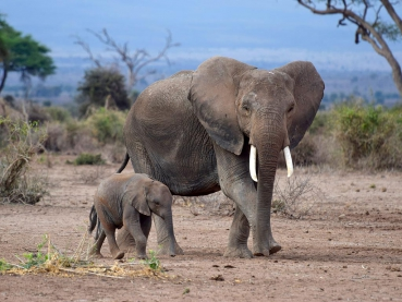 featured-Amboseli-NP_Maciej-Sudra_17